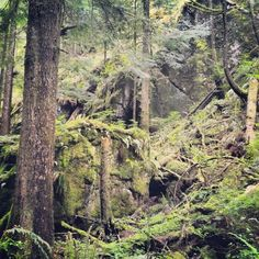 Little Si, the perfect after work hike | easy hikes near Seattle | huckleberryrainblog.weebly.com