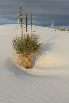 Plant growing in the dunes