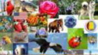 Find Alabama's official state symbols, emblems, and icons:   amphibians birds, butterflies, fishes, flags, flowers, foods, fossils, fruits, gems, minerals, rocks, insects, mammals, animals, mottoes, names and nicknames, reptiles, seals, shells, soils, songs, trees and more that represent the cultural heritage and natural treasures of Alabama