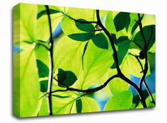 Green Leaves in Sunlight floral canvas from only £19.99 at Infusion Art http://www.infusionart.co.uk/products/Green-Leaves-in-Sunlight-251296.aspx