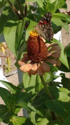 Fruit, Plants, Food, Butterflies, Meal, The Fruit, Eten, Meals, Plant