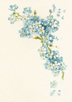 vintage paper with large bloom in corner - Google Search