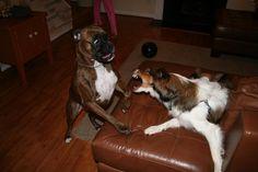 gretta and the grumpy lassie :)