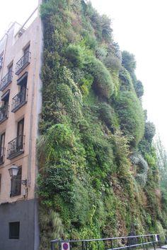 Jardin vertical, Madrid-España.