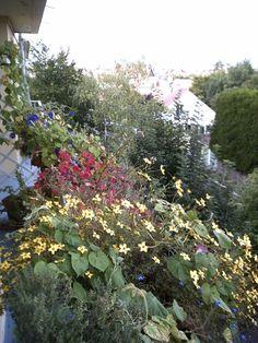 Cascade de fleurs d'été sur mon balcon