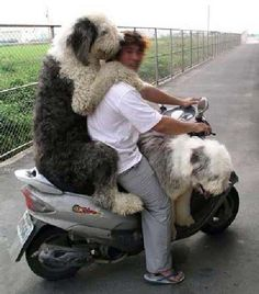 The Shaggy Dogs? More Funny Dog Pictures at: http://MoronsAreEverywhere.Com