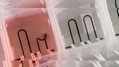 Científicos de Harvard crean primer corazón en un chip impreso en 3D