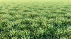 digital grass - Google Search