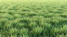 digital grass - Google Search