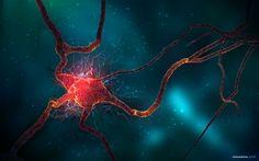 5 Ways To Harness Neurogenesis: Boost Your Brain