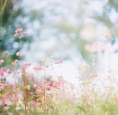 le terrain au printemps de rêve