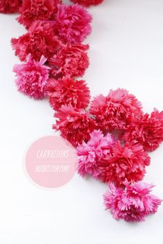 Bespotted. Love the musings of this blog, especially this apology letter to carnations!
