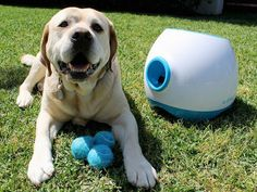 iFetch Too | Large Dog Fetch Machine | This would be perfect to keep your dog entertained when you're away from home! A busy dog means less separation anxiety and less destructive behavior.