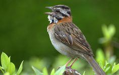Colombia: El ruido de Bogotá hace madrugar más a los pájaros