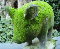 Mossy pig..how cute
