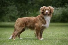 Top 10 adventure dogs