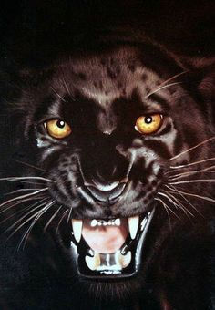 New Free Safe and Secure Hack Online Generator Cheat Real Works Big Cats, Cool Cats, Cats And Kittens, Beautiful Cats, Animals Beautiful, Cute Animals, Black Panther Cat, Gato Grande, Animal Totems