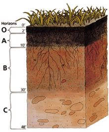 topsoil and subsoil colors