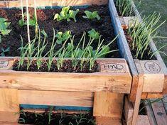 Magaságyás egyszerűen, gyorsan: raklapokból | Hobbikert Magazin Flora Garden, Household, Gardening, Plants, Furniture, Home Decor, Ideas, Decoration Home, Room Decor