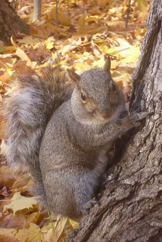 Squirrel in Fall by pegase1972, via Flickr