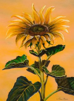 Drawing of a sunflower by crayon artist Kristina Nelson. Created with Crayola crayons! Crayon Drawings, Oil Pastel Drawings, Crayon Art, Blooming Sunflower, Sunflower Art, Beautiful Artwork, Cool Artwork, Vincent Van Gogh, Pastel Crayons