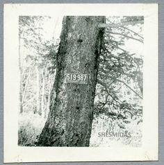 #326 1948 Missouri License Plate Nailed to a Tree, Vintage Photo   Collectibles, Photographic Images, Contemporary (1940-Now)   eBay!