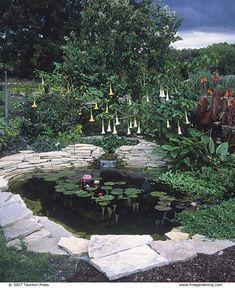 Planning Your First Water Garden