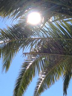 Poolside palmtree Celestial, Outdoor, Outdoors, Outdoor Life, Garden