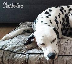 DIY coussin pour chien ou chat (pour une somme dérisoire, et avec un super résultat !) Bravo @charlotte8967 !! #Charlottises