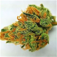 JOINT CANNABIS DISPENSARY IS THE NUMBER ONE FAST,FRIENDLY,DISCRETE,RELIABLE TOP DISPENSARY.Buy Marijuana Online | Buy Weed Online | THC and CBD Oil For Sale. Buy Marijuana Online, Buy Medical Marijuana Online, Buy Weed Online, Buy Cannabis Oil Online , THC, CBD Oil, hash,wax,shatter for sale,medical marijuana,cannabis,weed oil,THC,CBD,Concentrate .contact info Go to..https://www.jointcannabisdispensary.com Text or call +1(408)909-1859.