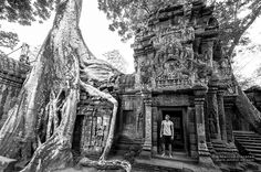 Monolithic trees growing on top of Ta Prohm walls in Siem Reap, Cambodia