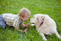 What type of dog will protect your family? These are the 10 most protective #dog breeds: http://www.entirelypets.com/top-10-protective-dog-breeds.html?utm_source=twitter&utm_medium=web&utm_campaign=eptwpost#utm_sguid=148622,57e5fdf3-b694-80e2-b68a-94392b7e9612