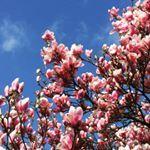 ❤️ Tumblr, Instagram Posts, Plants, Plant, Planting, Planets