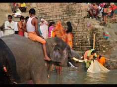 https://flic.kr/p/aHujoz | INDIA | Bathing in the Gandak river. pilgrims and elephants together. Photo taken in Bihar, India.           www.boazimages.com