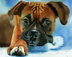Boxer dog art Print of my watercolor painting by rachelsstudio - Boxer Baby