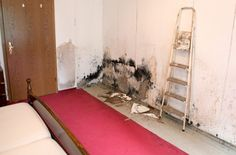 When dealing with drywall water damage, you do not always need to replace your drywall after a fire or flood. Dealing with drywall water damage involves Toxic Mold, Cleaning Mold, Restoration Services, Water Damage, Drywall, Take That, Indoor, Fire, Inspiration