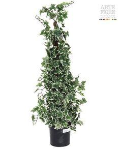Edera variegata su bastone muschiato