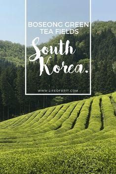 Boseong Green Tea Fields www.lifeofbrit.com