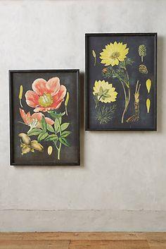 Botanical Specimen impressão