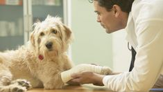 Where To Turn If You Can't Afford Veterinary Care For Your Dog Read more at http://dogtime.com/dog-health/34945-turn-cant-afford-veterinary-care-dog#OhkwZTUZ4WvsQhDQ.99
