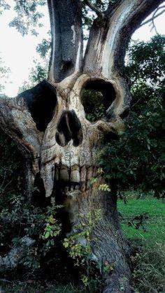 Skull tree | unknown credit