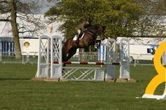 Serious competition horse Echo P for sale | HorseDeals.co.uk