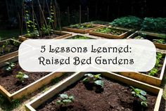 5 Lessons Learned About Raised Bed Gardens