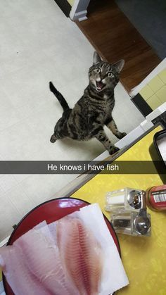 cats and kittens funny hilarious so cute cats and kittens funny hilarious so cute Funny Animal Memes, Funny Animal Pictures, Funny Cats, Funny Animals, Cute Animals, Cute Cats And Kittens, Cool Cats, Adorable Kittens, Photo Chat