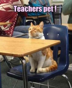 Funny Animal Pictures Of The Day - 24 Pics #funny #picture #meme