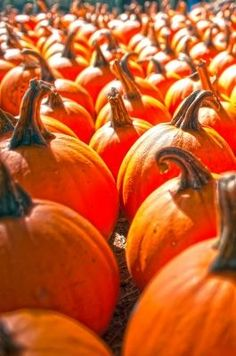 DIY Pumpkin Facial - Freda's Potions Blog