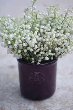 lily of the valley- plant them