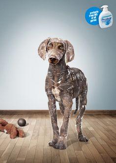 Animals in Print Ads