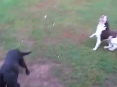 Blind dog playing fetch - 9GAG