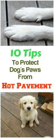 10 Tips To Protect Your Dog's Paws From Hot Pavement...see more at PetsLady.com -The FUN site for Animal Lovers